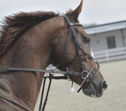 Horse Westland A & P Show